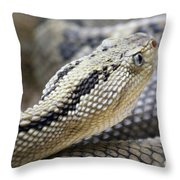 Coiled In Wait Throw Pillow