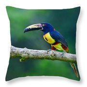 Collared Aracari Throw Pillow