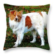 Collie On Lawn Throw Pillow
