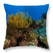 Colony Of Crinoids, Papua New Guinea Throw Pillow