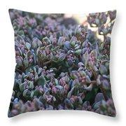 Color Flash Throw Pillow