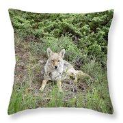 Colorado Coyote Throw Pillow