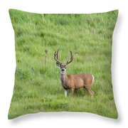 Colorado Deer Throw Pillow