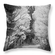 Colorado Rocky Mountain Aspen Road Portrait Bw Throw Pillow