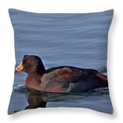 Colorful American Coot Throw Pillow