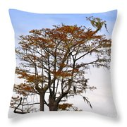 Colorful Cypress Throw Pillow