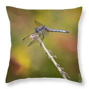 Colorful Dragonfly Dream Throw Pillow