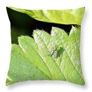 Colorful Garden Fly 2 Throw Pillow