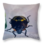 Colorful Hemiptera Nymph 1 Throw Pillow