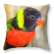 Colorful Lorikeet Parrot Throw Pillow