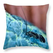 Colorful Psocid 1 Throw Pillow