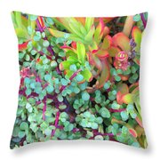 Colorful Succulent Plants For You Throw Pillow