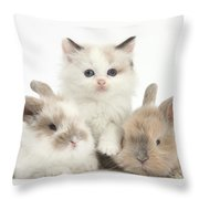 Colorpoint Kitten With Baby Rabbits Throw Pillow