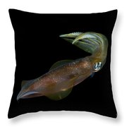 Colourful Squid, Anambas, Indonesia Throw Pillow