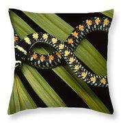 Colubrid Snake Boiga Sp A Flying Snake Throw Pillow