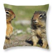 Columbian Ground Squirrels, Banff Throw Pillow