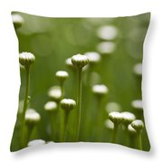 Coming Up Daisies Abstract Throw Pillow