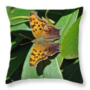 Comma Anglewing Butterfly - Polygonia C-album Throw Pillow