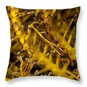 Commensal Shrimp Throw Pillow