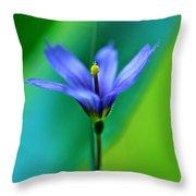 Common Blue Eyed Grass Sisyrinchium Throw Pillow