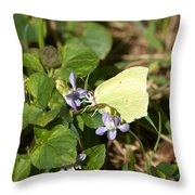 Common Brimstone Throw Pillow