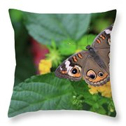 Common Buckeye II Throw Pillow