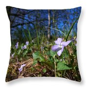 Common Dog-violet Throw Pillow