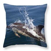 Common Dolphin Delphinus Delphis Throw Pillow