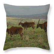 Common Eland 3 Throw Pillow