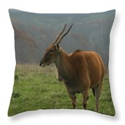 Common Eland Throw Pillow