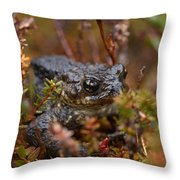Common Frog Throw Pillow
