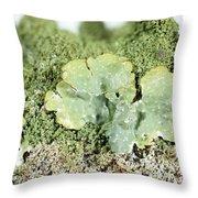 Common Greenshield Lichen Throw Pillow