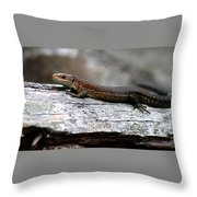 Common Lizard Throw Pillow