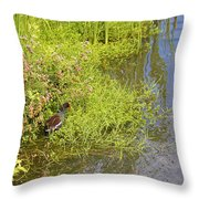 Common Moorhen At The Waters Edge Throw Pillow