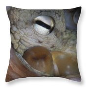 Common Octopus Octopus Vulgaris Close Throw Pillow