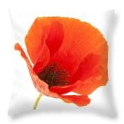 Common Poppy Flower Throw Pillow