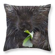 Common Porcupine Erethizon Dorsatum Throw Pillow