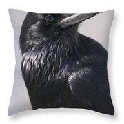 Common Raven, Jasper National Park Throw Pillow
