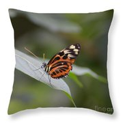 Common Tiger Glassywing Throw Pillow