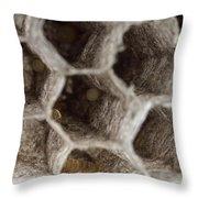 Common Wasp Larva Throw Pillow