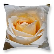 Common Wealth Glory Rose Throw Pillow