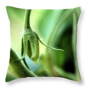 Conception Of A Roma Tomato - On The Vine Square Throw Pillow