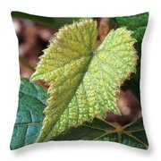 Concord Grape Plant Throw Pillow by Science Source