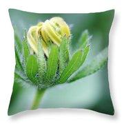 Cone Flower Rubeckia Hirta  Throw Pillow