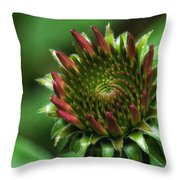 Coneflower Close-up Throw Pillow