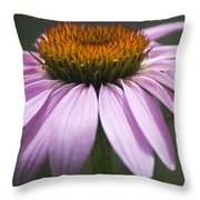 Coneflower Visitor Throw Pillow