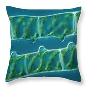 Conjugation In Algae, 1 Of 4 Throw Pillow
