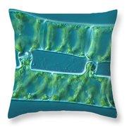 Conjugation In Algae, 2 Of 4 Throw Pillow