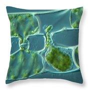 Conjugation In Algae, 3 Of 4 Throw Pillow
