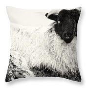 Connemara Sheep Throw Pillow